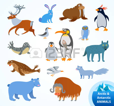 7,349 Arctic Animals Stock Vector Illustration And Royalty Free.