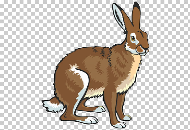 European hare Arctic hare Snowshoe hare , rabbit PNG clipart.