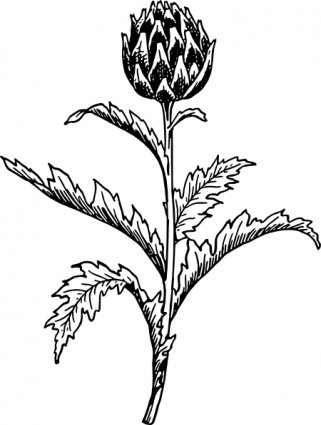 Free Artichokes Clipart and Vector Graphics.