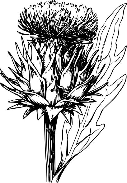 Artichoke clip art Free vector in Open office drawing svg ( .svg.