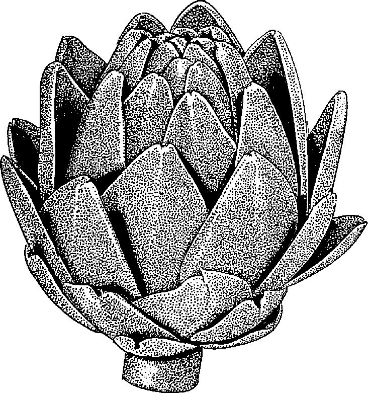 Artichoke Clipart.