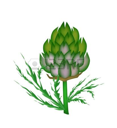 240 Artichoke Flower Stock Illustrations, Cliparts And Royalty.