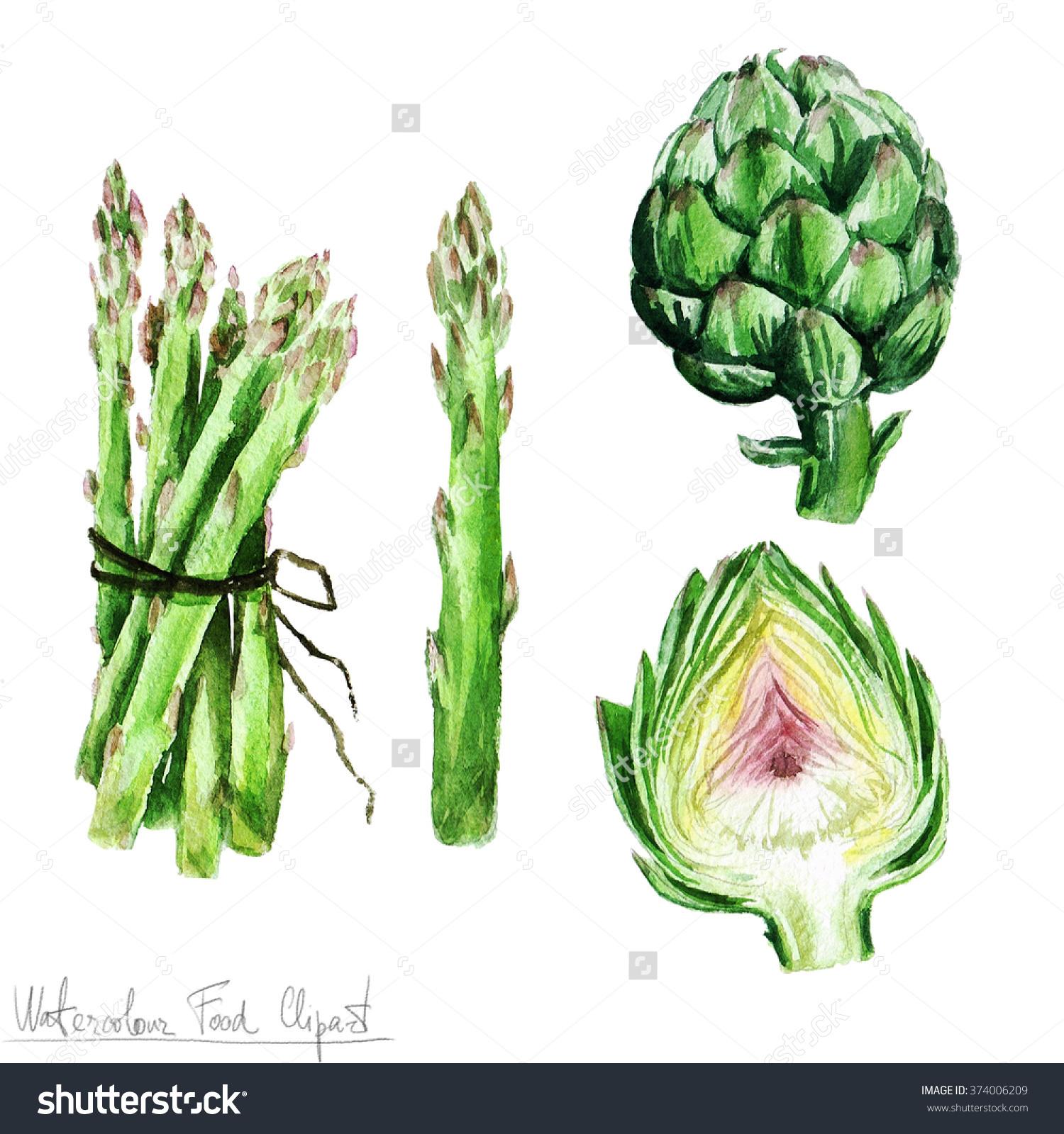 Watercolor Food Clipart Asparagus Artichoke Stock Illustration.