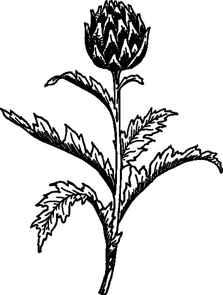 Artichoke Clip Art at Clker.com.