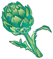 Artichoke Plant Isolated on White stock vectors.