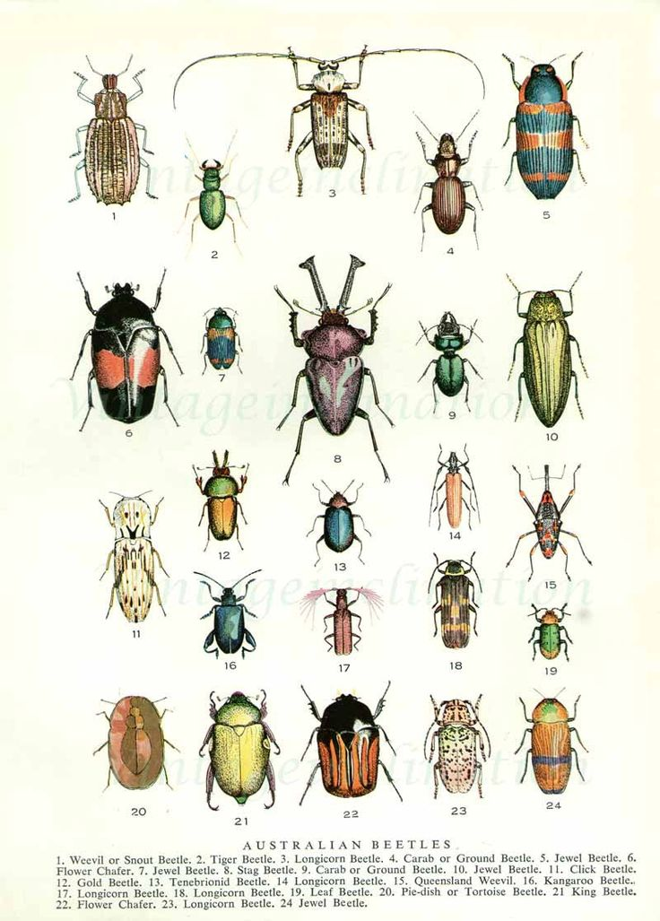 Artificial insects clipart clipground for Grasshopper tattoo supply