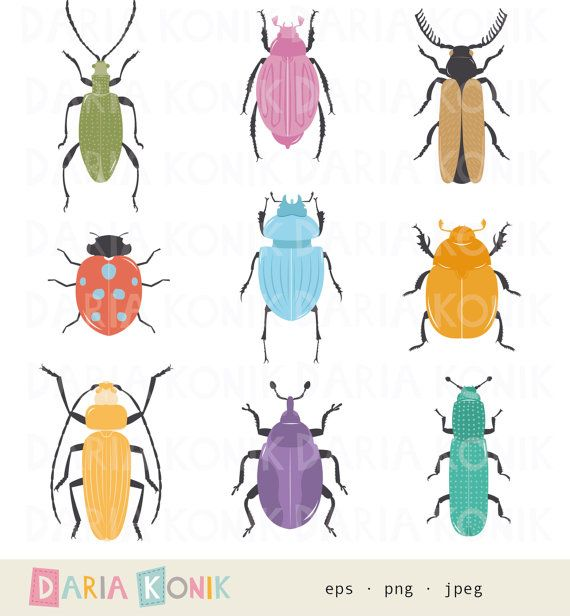 1000+ ideas about Beetle Insect on Pinterest.