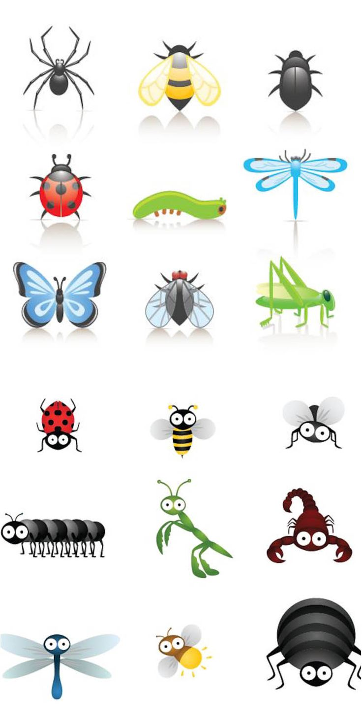 cartoon animal clipart insects clipground