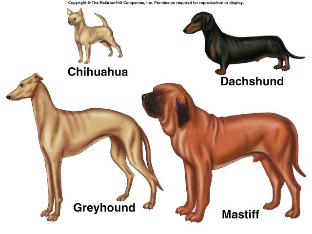 Introduction to Darwinian Evolution.
