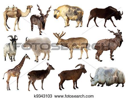 Stock Photo of Set of Artiodactyla animals k9343103.