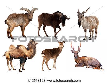 Pictures of Set of Artiodactyla mammal animals k12518198.