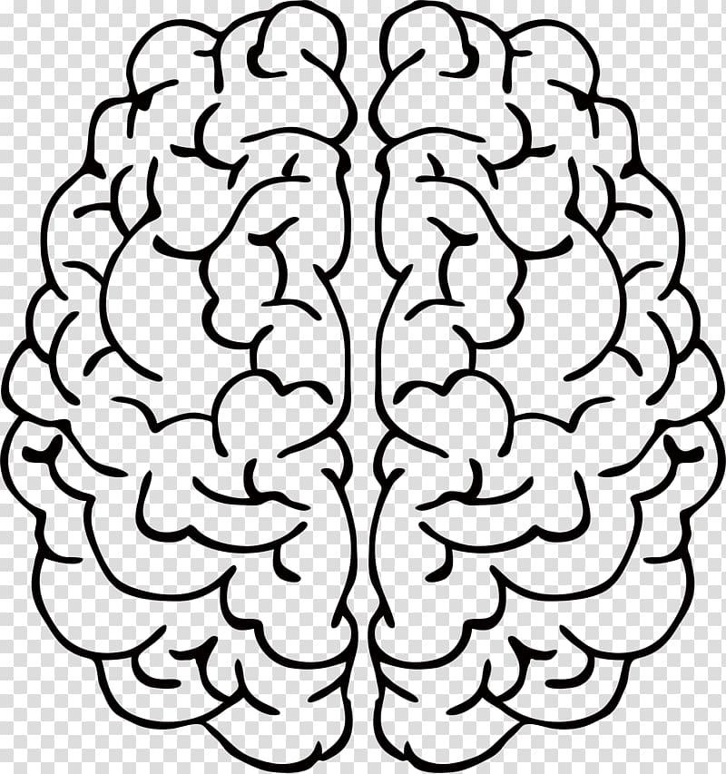 Brain Drawing Line art Abstract art , mind transparent.