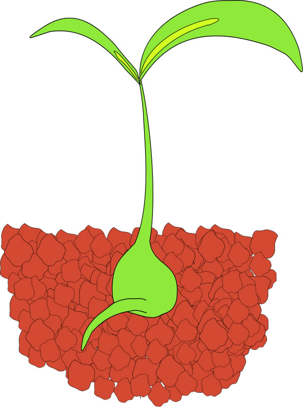 Seed Sprouting Clip Art.