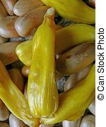 Stock Image of Jackfruit, Artocarpus heterophyllus Lam, Moraceae.
