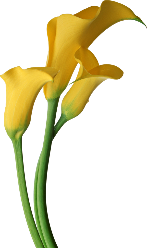 Free Flowers Images.