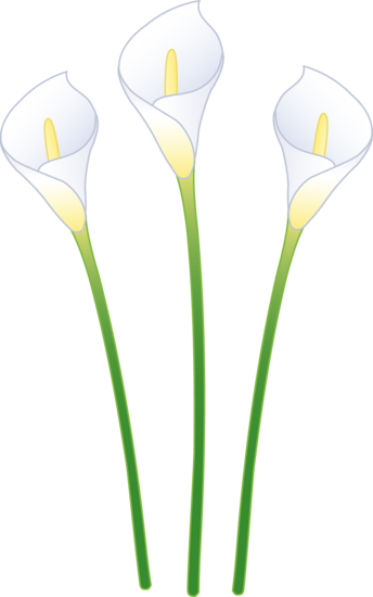 Arum Lilly Clipart.