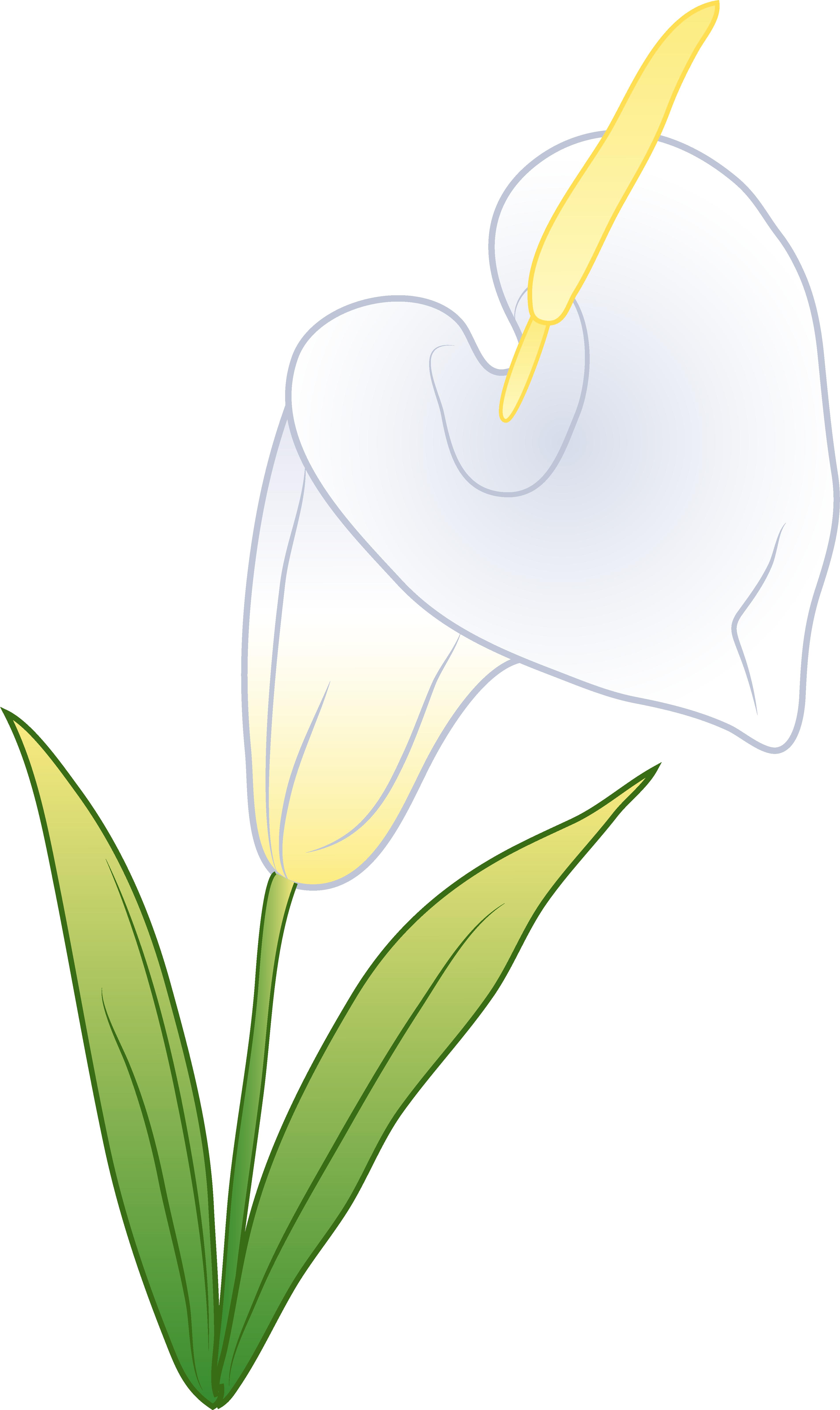 Single White Calla Lily.