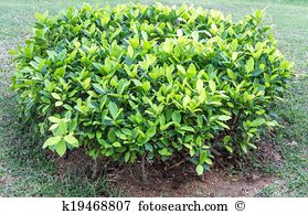 Bushes Stock Photos and Images. 230,159 bushes pictures and.