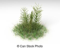 Horsetail Illustrations and Clip Art. 40 Horsetail royalty free.
