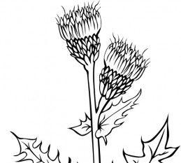Ku Cirsium Arvense Outline clip art.