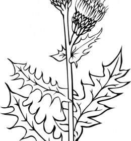 Flowers Outline Clip Art.