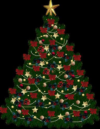Mundo PNG: Árvores de Natal.
