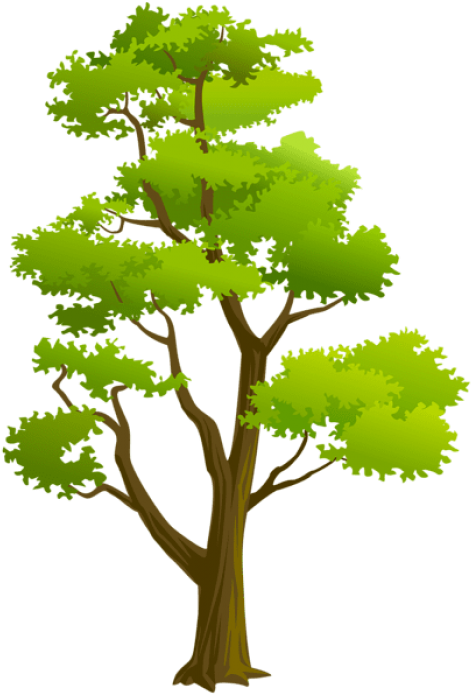 Free Png Download Tree Png Png Images Background Png.