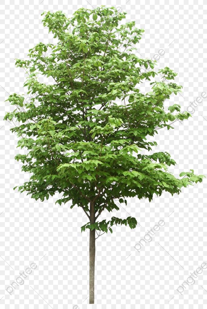 As árvores, A árvore, As árvores, As árvores Arquivo PNG e PSD para.