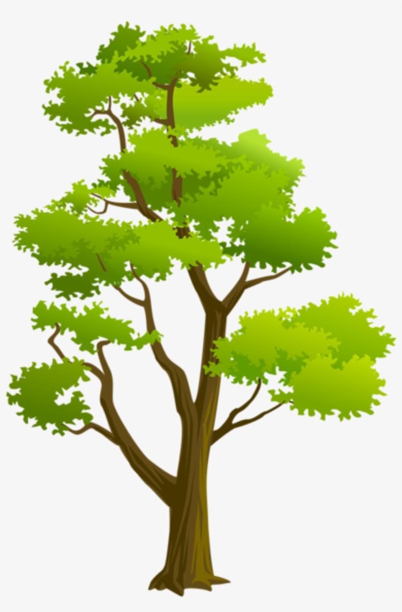 Árvores Árvore 4 Png.