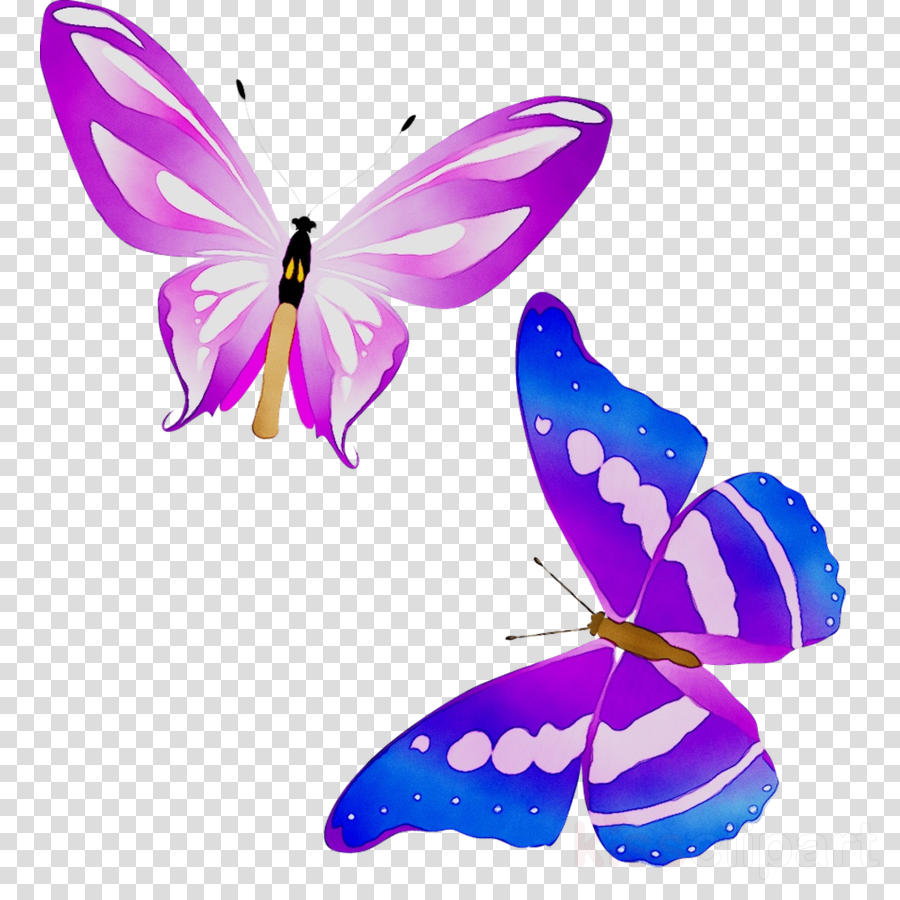 Butterfly Illustration clipart.