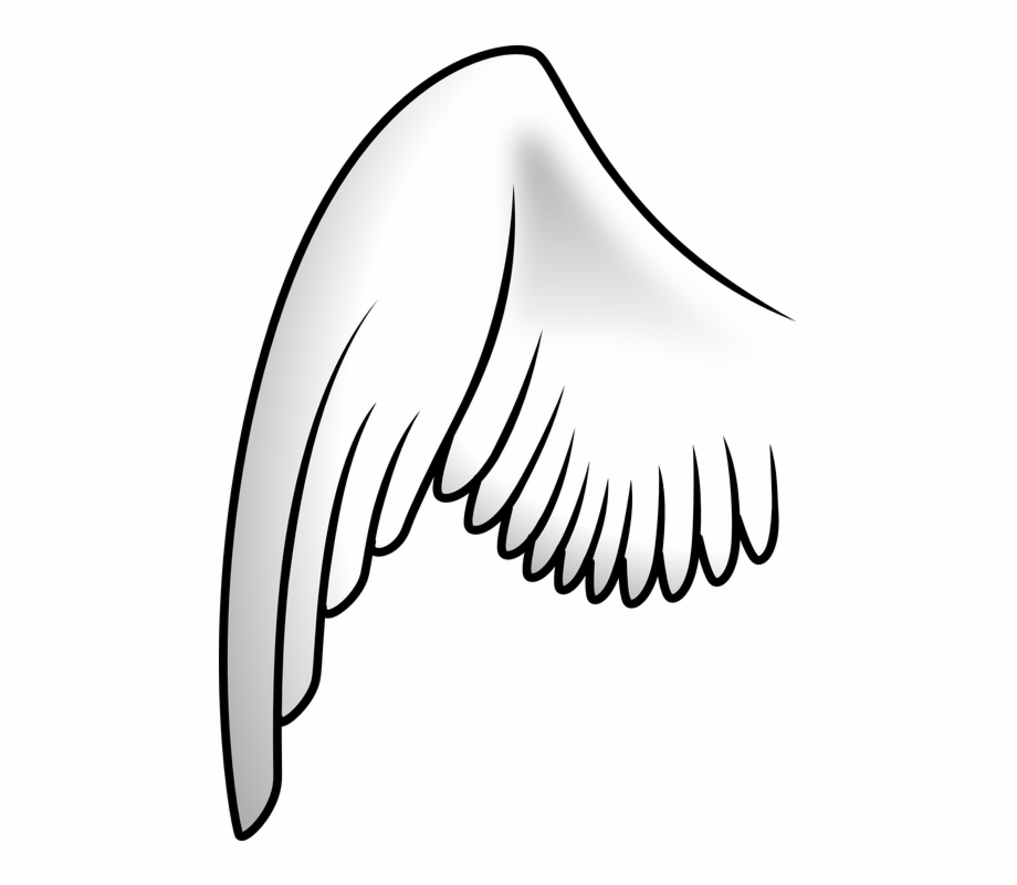 Asa De Anjo Desenho Png.