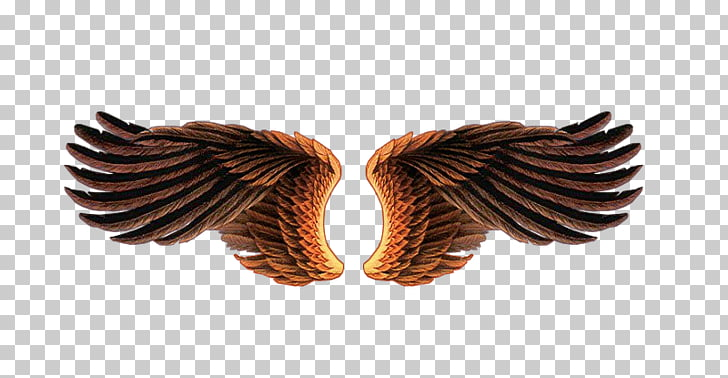 Lossless compression, asas PNG clipart.