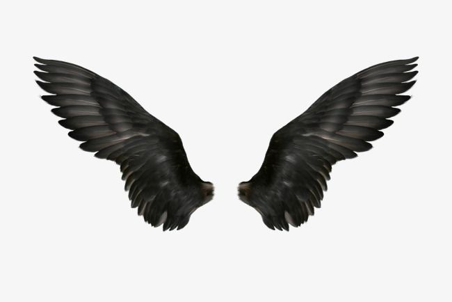 Black Wings, Wing, Devil PNG Transparent Clipart Image and PSD File.