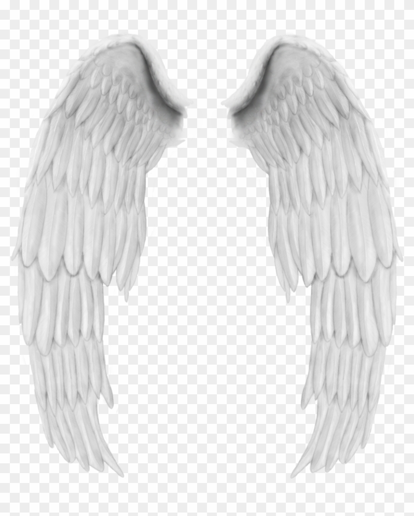 Angel Wings, Collage, Free, Design, Wing Wing, Stickers,.