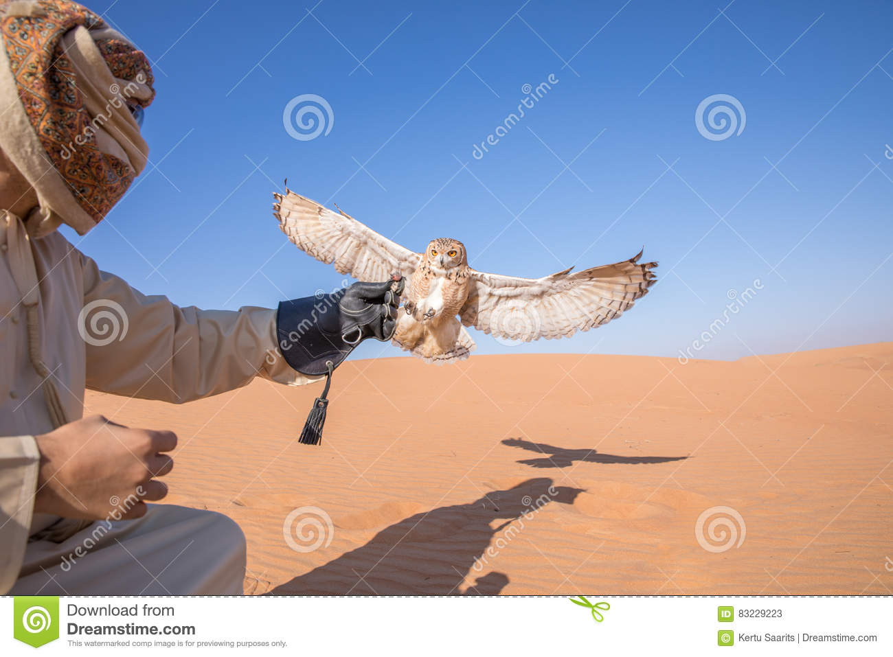 Young Male Pharaoh Eagle Owl During A Desert Falconry Show In.
