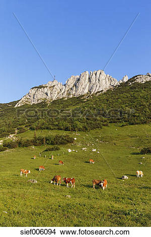 Stock Photo of Germany, Bavaria, Upper Bavaria, Chiemgau Alps.