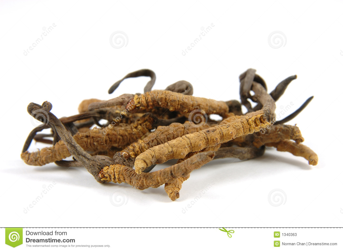 Cordyceps (a Genus Of Ascomycete Fungi) Stock Photos.