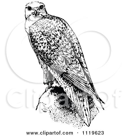 Falcon Clipart Black And White.