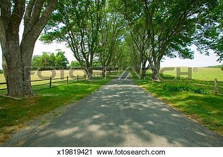 Stock Photography of 'Tree.