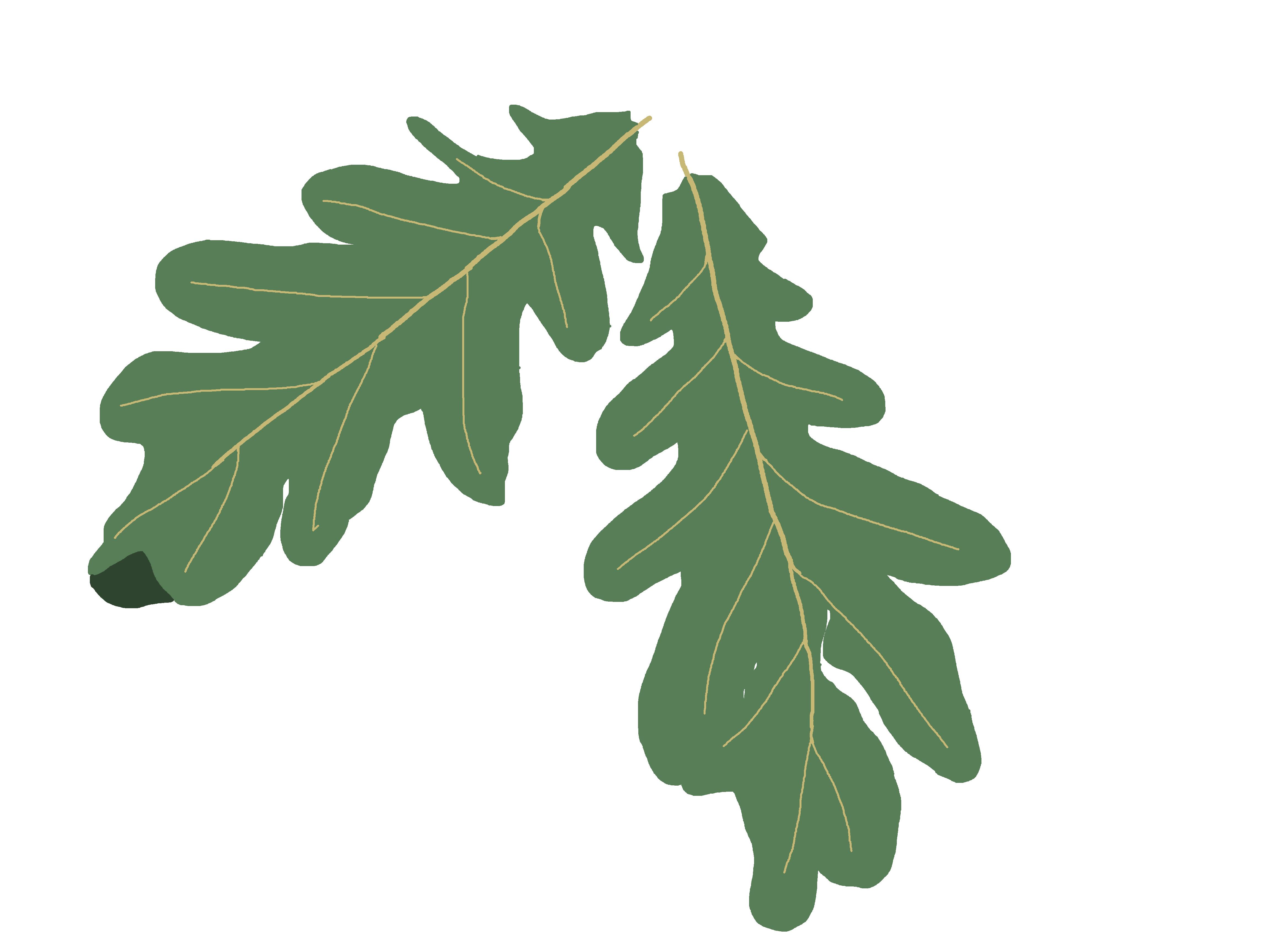 Clipart leaf oak tree, Clipart leaf oak tree Transparent.
