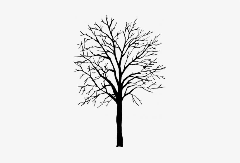 Tree Height.