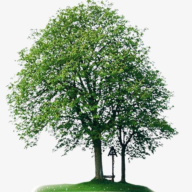 Ash tree clipart 9 » Clipart Portal.
