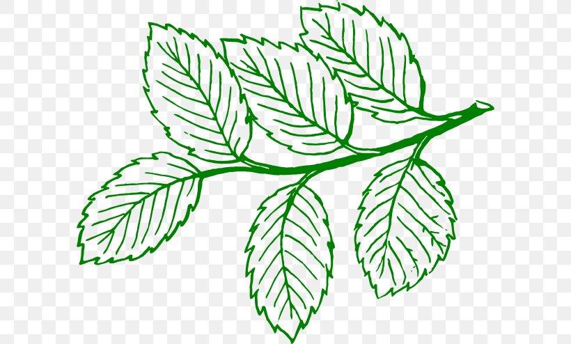 Leaf Tree Drawing Clip Art, PNG, 600x494px, Leaf, Ash, Askur.