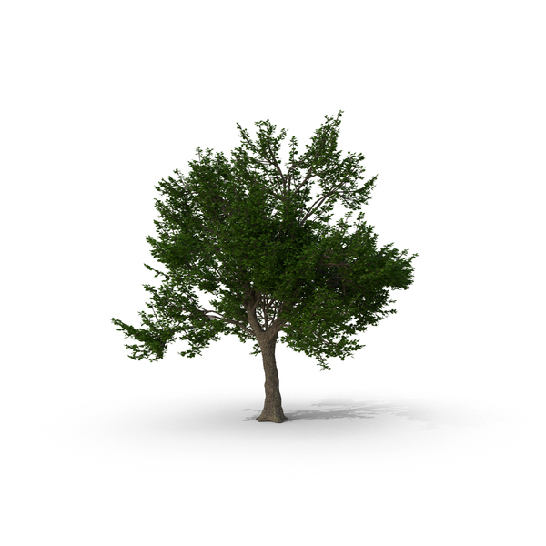 Green Ash Tree PNG Images & PSDs for Download.