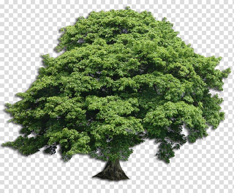 L.K. Wood: As Everyone Should Arborist Tree Trunk Pruning, ash.