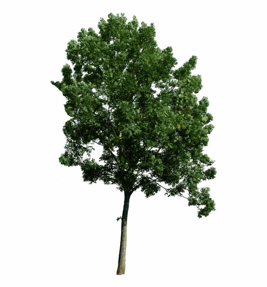 Photoshop Trees Plan View.