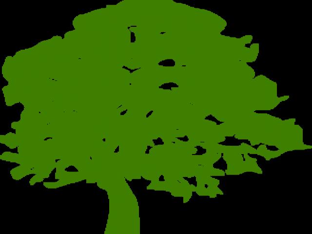 Tree Clipart Clipart Ash Tree.