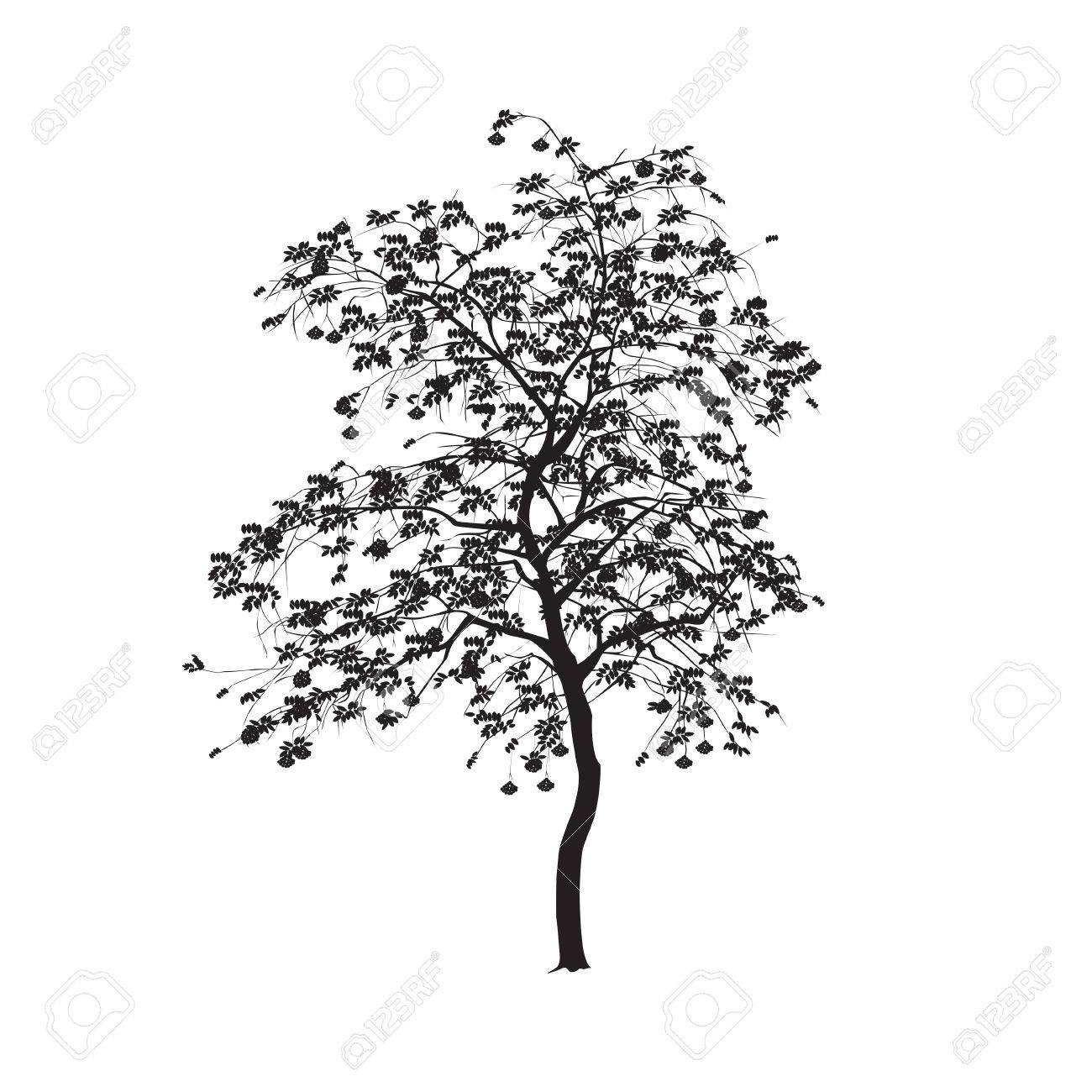 Ash Tree Silhouette.