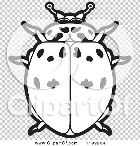 Clipart of a Black and White Ashy Gray Lady Beetle.
