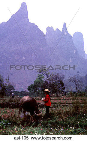 Stock Image of Woman Farmer with a Buffalo Gulin China asi.